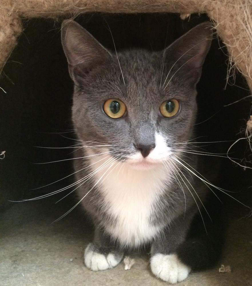 Cats For Adoption In New Hampshire